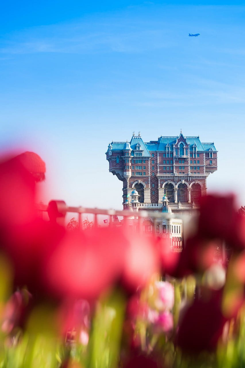tulip_2015_7