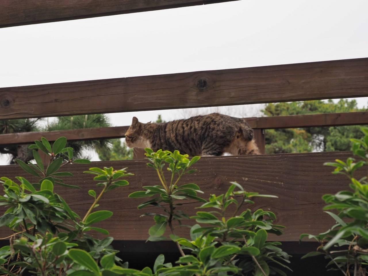 ディズニーランドに現れた猫